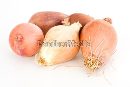 alimento cinco vegetal cebola chalota isolado