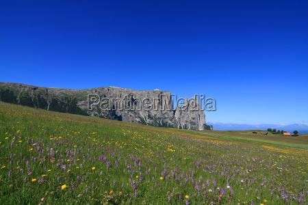 orquideas no pasto alpino