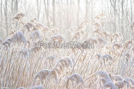 inverno frio coque droga gramineas geada