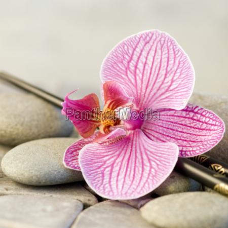orquidea da flor vida ainda