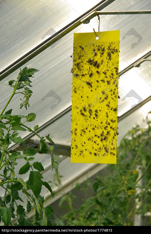 gelbtafel, -, yellow, insect, stick, 02 - 1774813