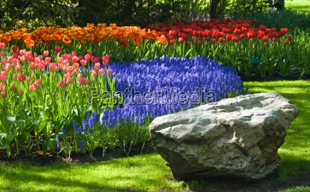 jardim flor planta flores tulipas holanda