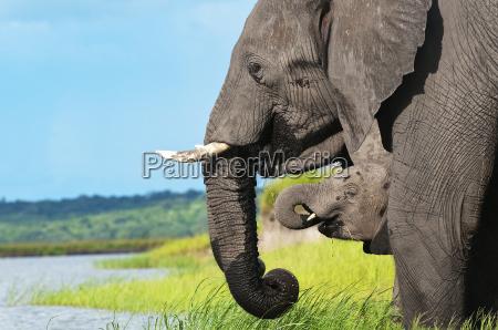 africa elefante namibia mamiferos animais selvagens