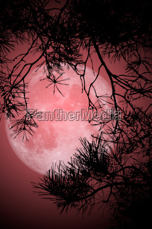 lua ilustracao ramo ceu natureza tanino