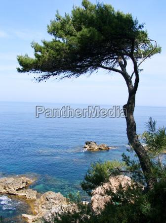 pinheiro no mar mediterraneo