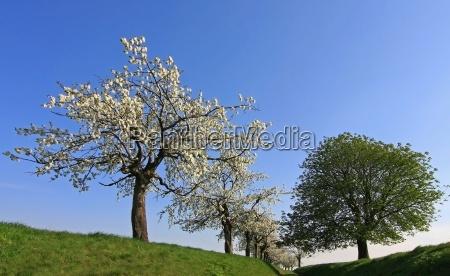 arvore arvores estrada de terra primavera