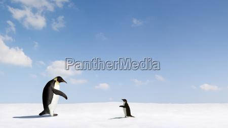 projeto animais pinguim conexao conectar contato