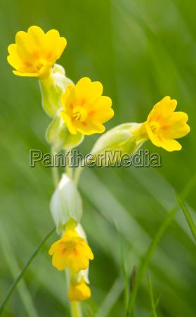 flor planta botanica primavera natureza