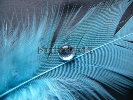 primavera azul com grandes gotas de