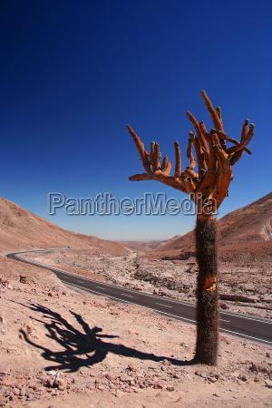 parque nacional chile cacto andes