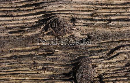 madeira marrom droga abstrato bronzeado estrutura