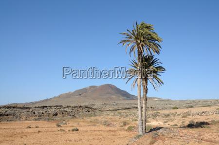 desert wasteland palms oasis canary islands
