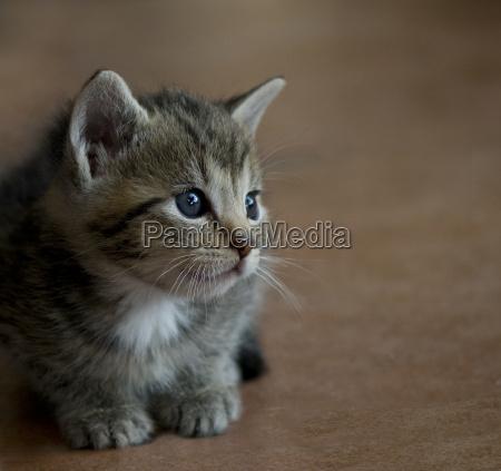 animal de estimacao irrelevante minusculo pequenino