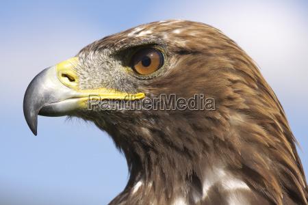 passaro retrato passaros ave de rapina
