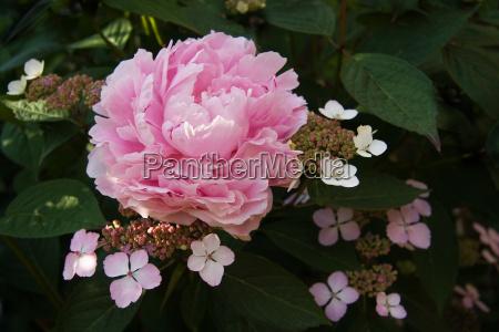 parque jardim flor planta flores verao
