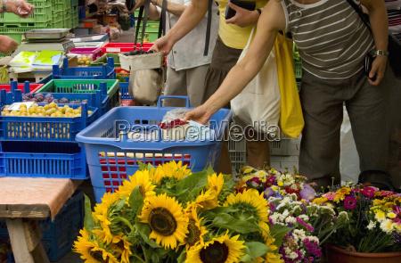 mao maos flor flores planta compras