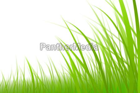 grama ilustracao grafica prado