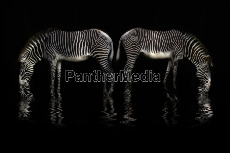 agua potavel da zebra