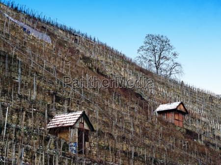 casa construcao arvore inverno agricultura vinhedo