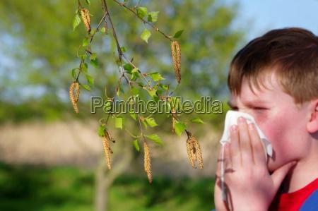 alergia ao polen de betula
