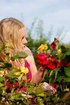 woman is cutting roses in the