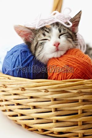 gato que joga com fio