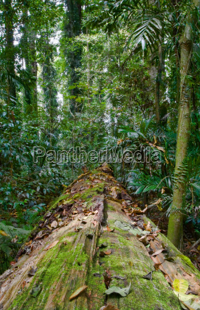 fallen tree in the rainforest