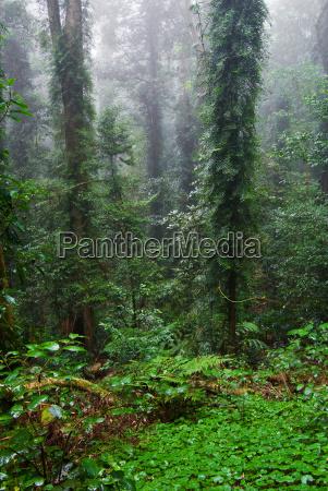 rain, forest - 3323589
