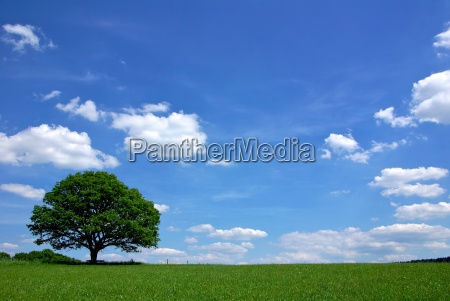 arvore verao carvalho liberdade ceu paisagem