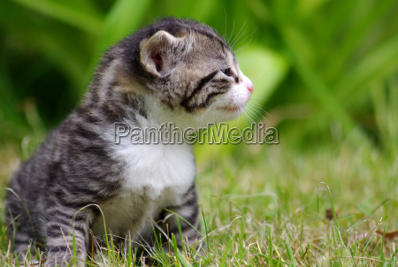 berlim cimento gato ressaca
