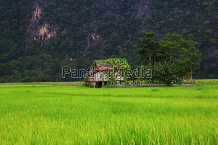 casa construcao campo arrozais quinta apresentar
