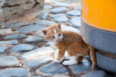 bebe gato