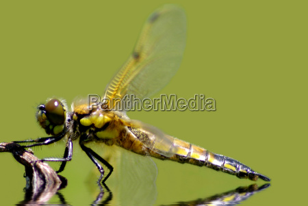 ambiente animais berlim libelula libelulas natureza