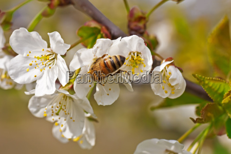 close up animal inseto flor planta