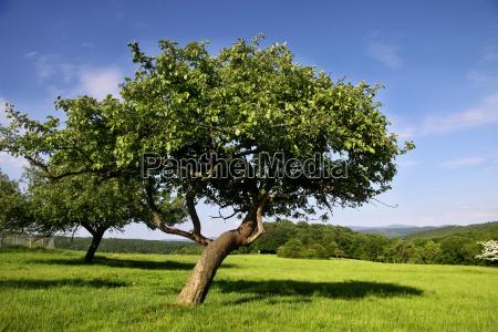 prado disperso da fruta no verao