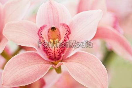 flor planta flores orquidea orchids cymbidium