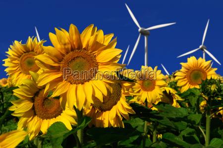turbinas de vento atras de um