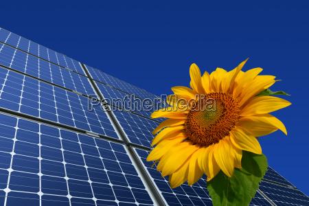 modulos solares monocristalinos e girassol