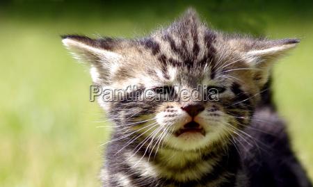 animais gatos berlim cimento gato ressaca