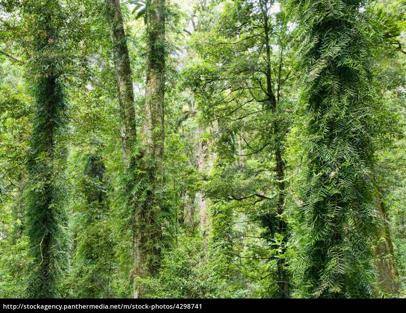 beleza, da, floresta, tropical - 4298741