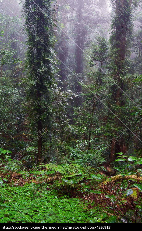 rain, forest - 4336813