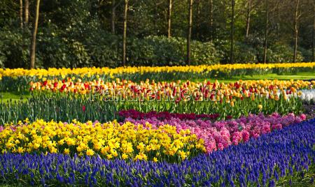 jardim flor planta flores tulipas jacintos
