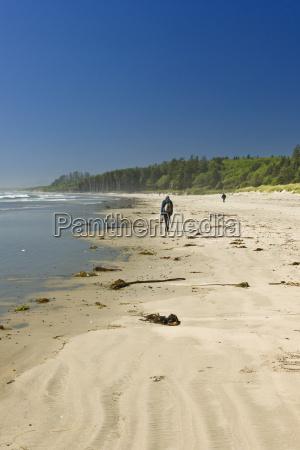 sandy beach in pacific rim national