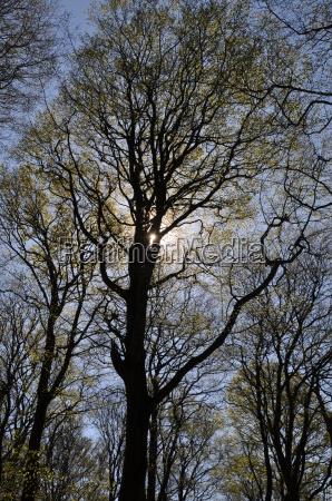 a, árvore, místico - 4986621