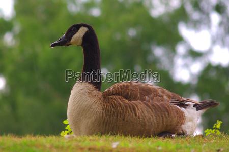 ambiente passaro passaros berlim patos animais
