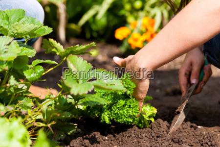 gardening in summer woman planting