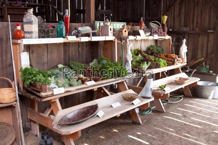 legumes frescos em um celeiro de