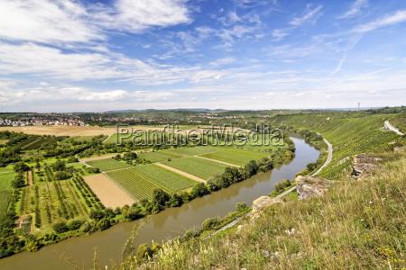 cultivo de vinho vale rebstock