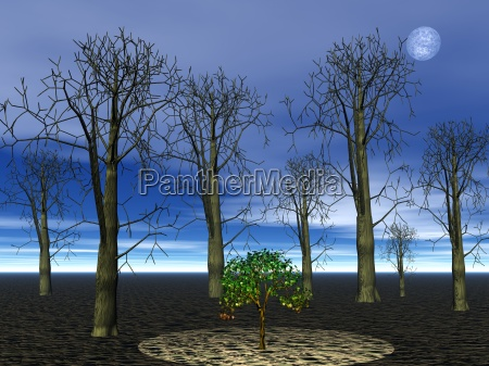 arvore arvores noite ilustracao florestas floresta