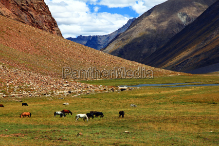 tibete montanha himalaia hochmoor zanskar ladakh